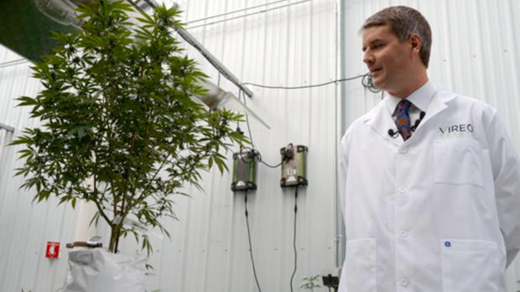 Minnesota cannabis firm expands to research psychedelic medicines