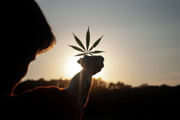 Cannabis Movers & Shakers: Charlotte's Web, Sundial, Aleafia Health, Grown Rogue, Simplifya