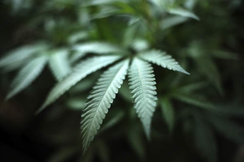 Michigan Gov. Whitmer signs marijuana legislation regulating delta-8 THC products