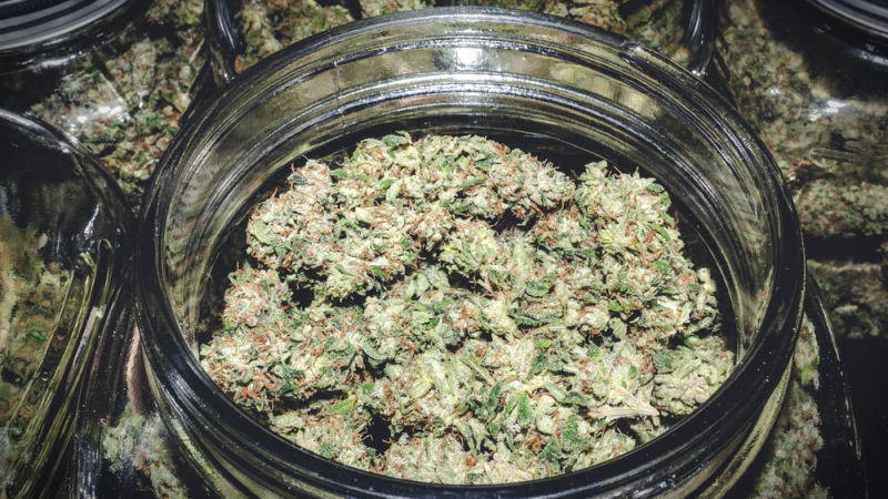 Berkley moving ahead in marijuana licensing process after lawsuits dismissed