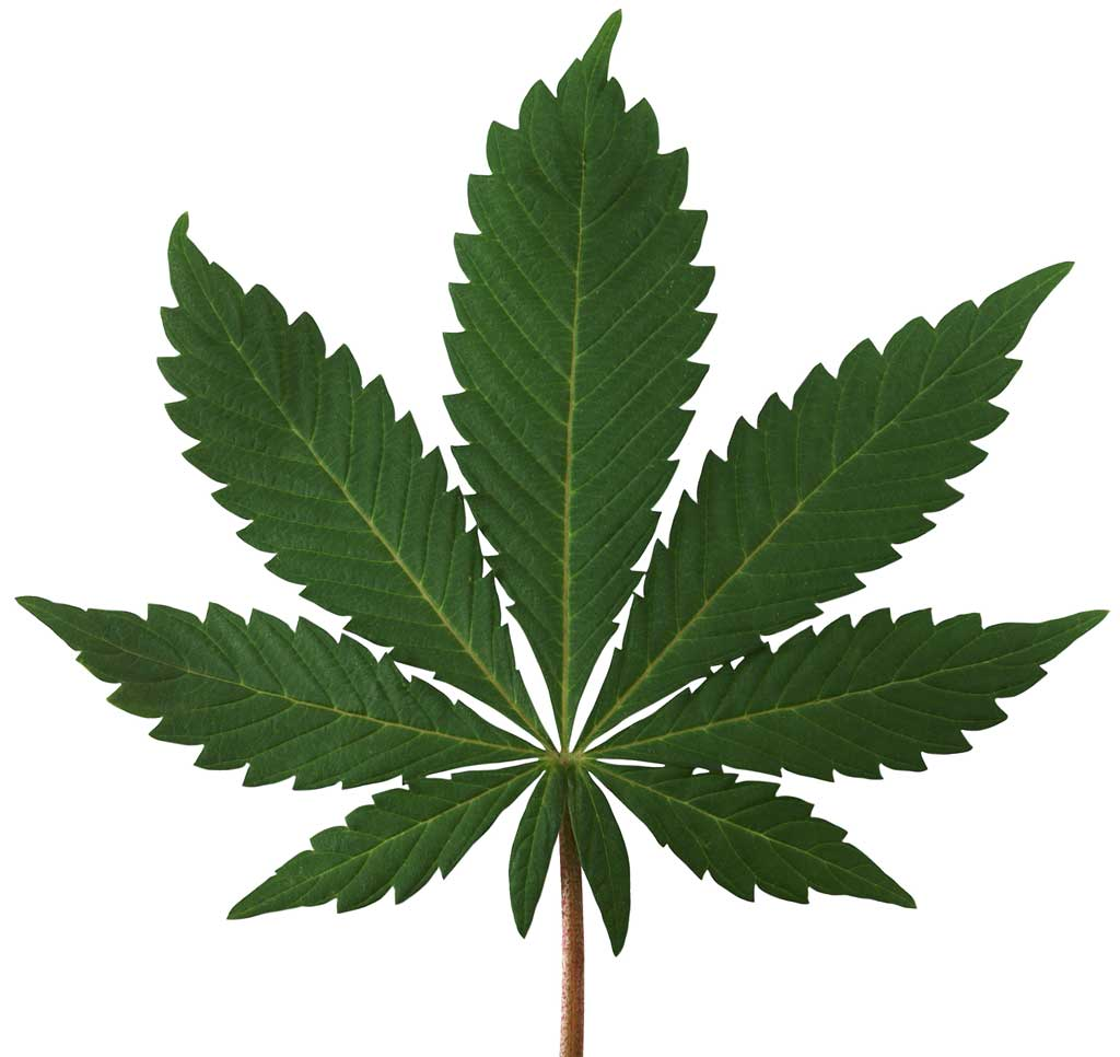 Princeton opts out of marijuana licenses - for now