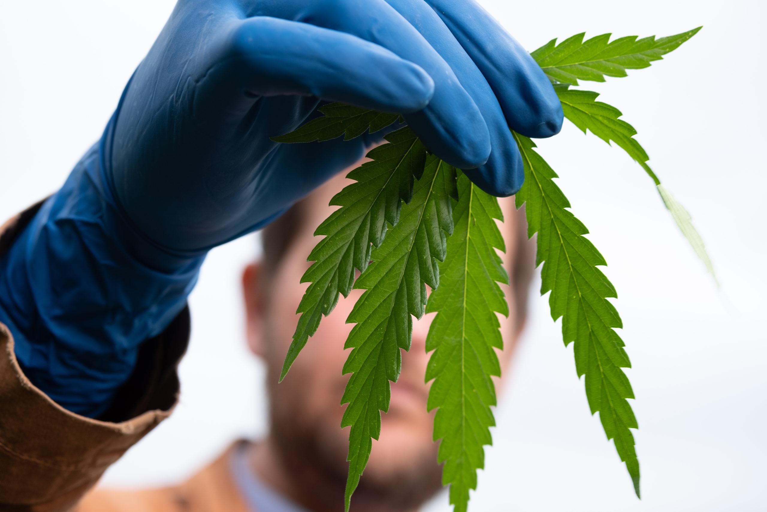 Who will be last? Wyoming, Idaho, Kansas, S.C. only states where marijuana is fully criminalized