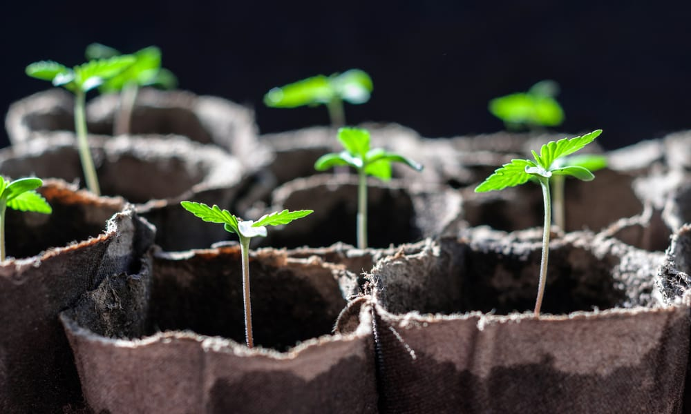 'Grow Your Own Medical Marijuana' Bill Advances in N.H. Legislature