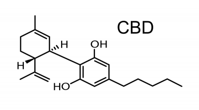 How the Human Body is Designed for CBD