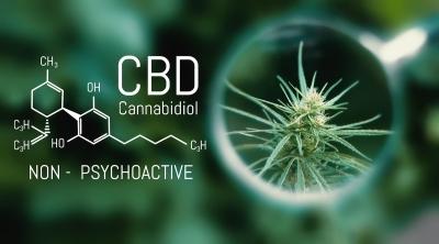 Study: CBD Associated With Anti-Cancer Activity