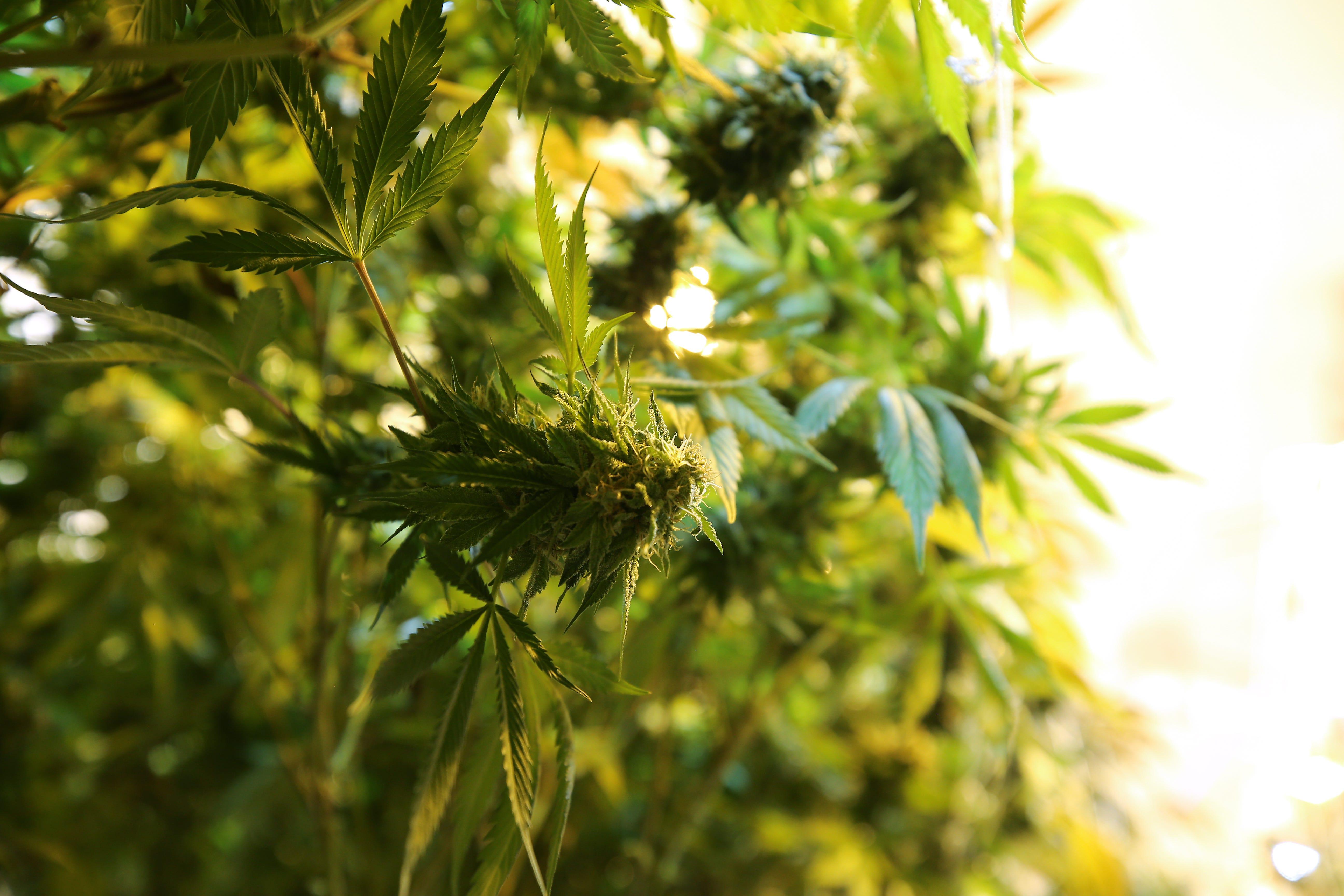 Democratic lawmakers introduce bill to legalize marijuana in Ohio