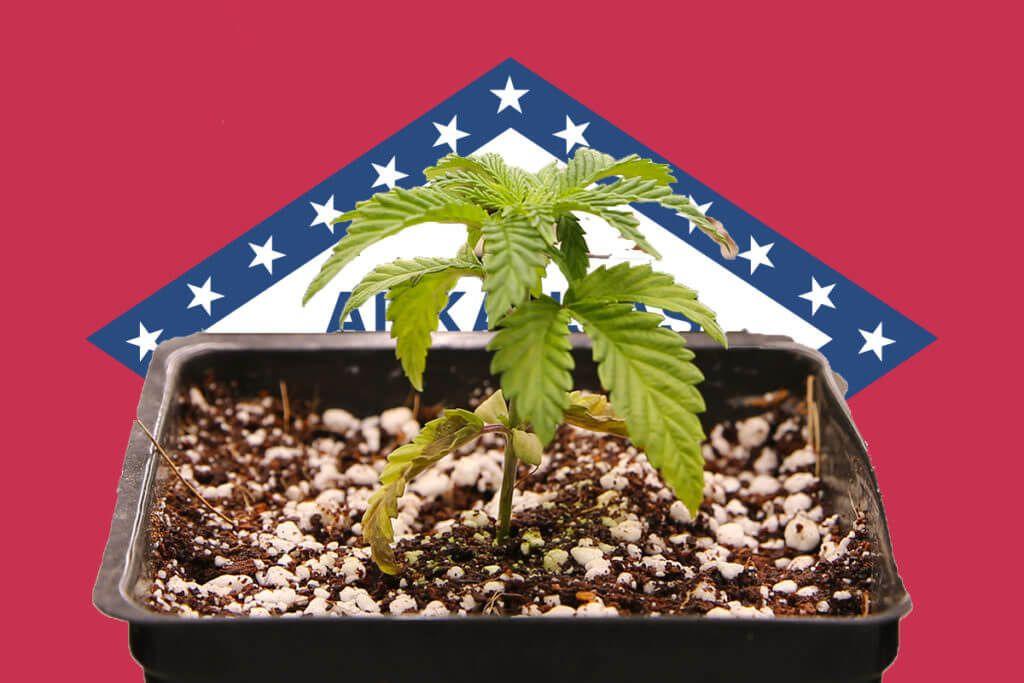 Arkansas opens up medical marijuana processor, transporter licensing