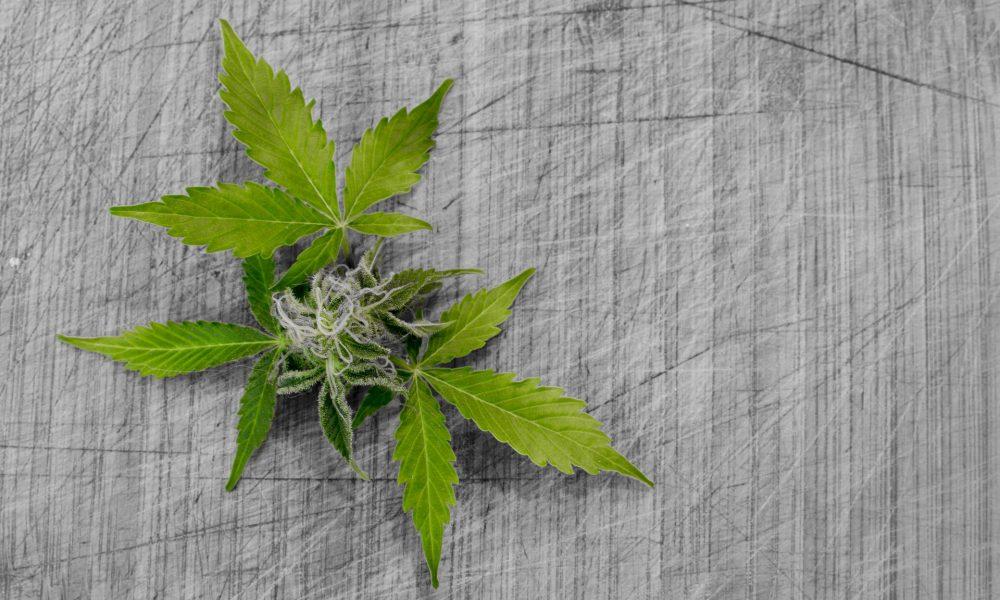Cannabis banking & psychedelics amendments in Congress