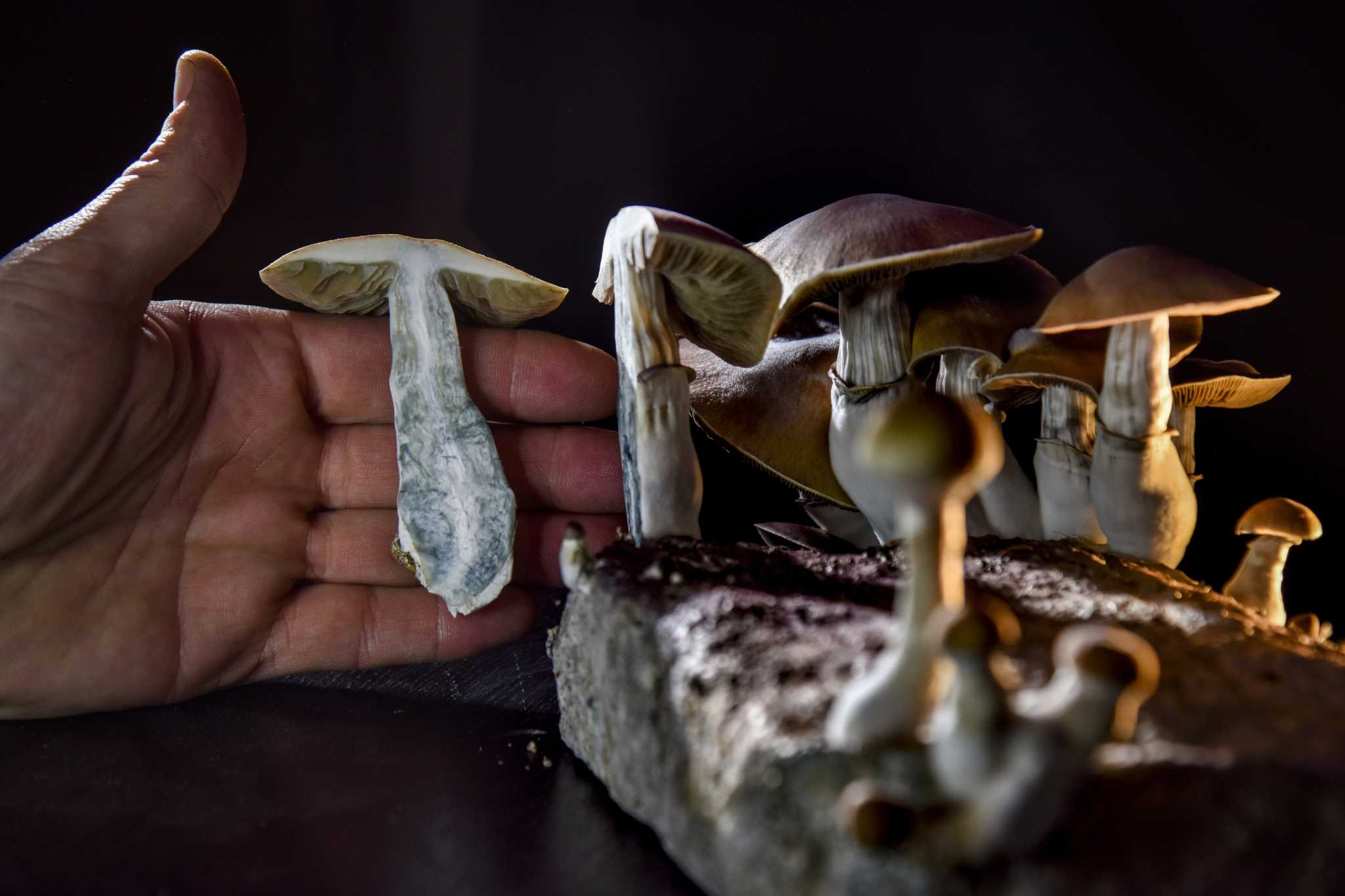 D.C. residents to vote on decriminalization of 'magic mushrooms' on November ballot