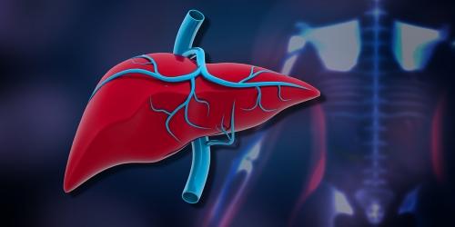 CBD for Liver & Kidney Disease