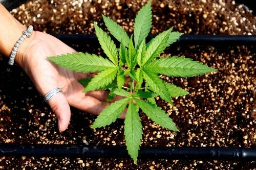Despite Promise, Minorities Left Out of Illinois' Billion Dollar Cannabis Industry